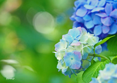 明日に向かって咲く花は