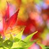 秋の贈り物♪ 木曜日ハート