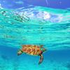 エメラルド色の海を泳ぐ