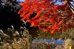 公園の秋 3