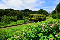 ローカル線夏風景