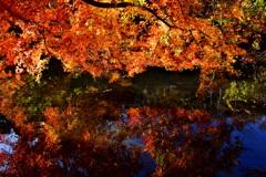 公園の秋 2