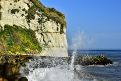 イソギク咲く海岸