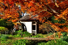水車小屋の紅葉