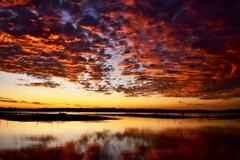 沼の朝焼け