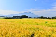 筑波山と麦秋