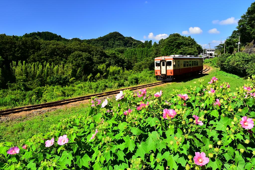 いすみ鉄道 夏