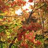 カラフルな紅葉