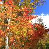 城ヶ倉付近の紅葉