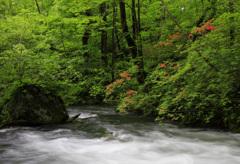 奥入瀬渓流 1
