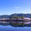 快晴の桜並木