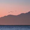 渡り鳥と雲仙普賢岳