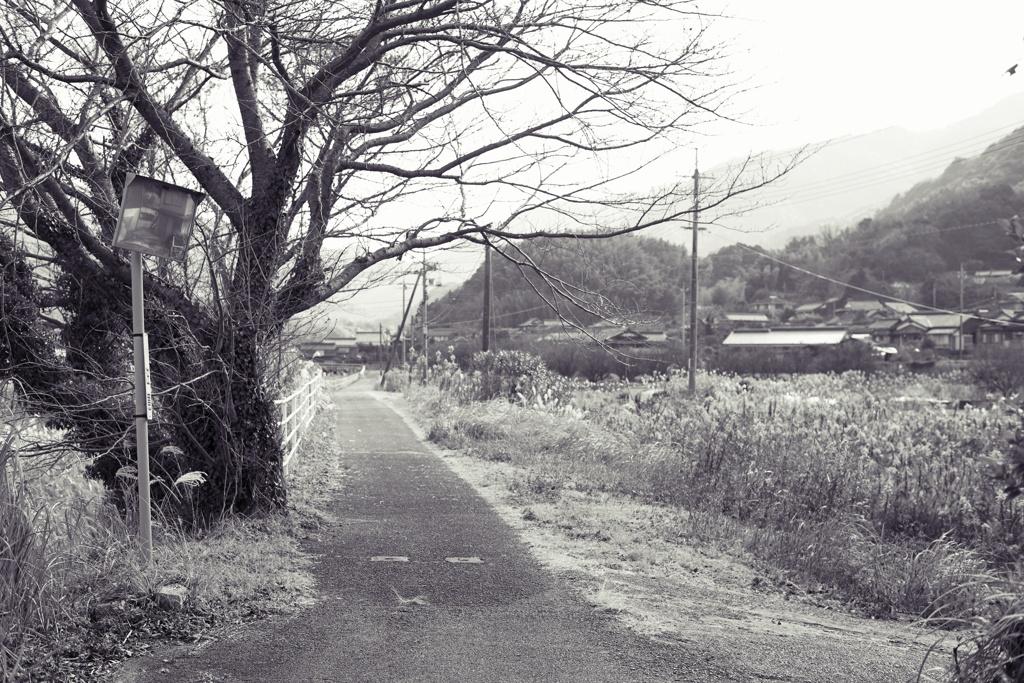 カーブミラーと道