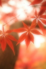 新宿御苑・秋