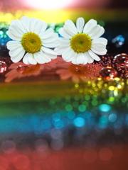 虹を越えて