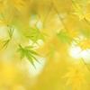 黄に溶け込む