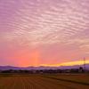 うろこ雲の夕景