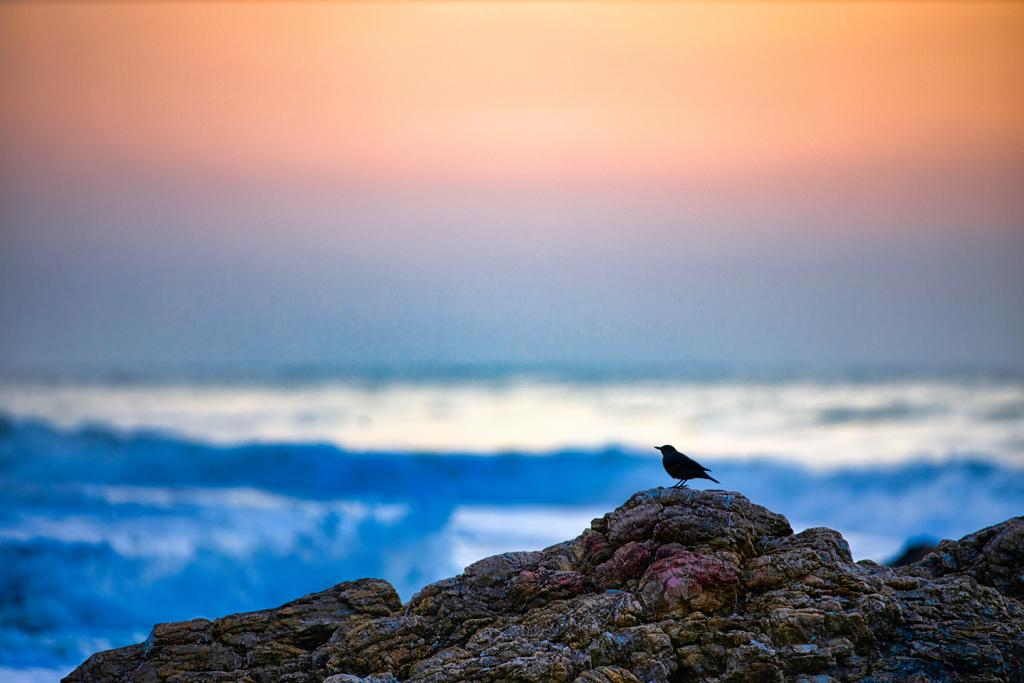 夜明けの鳥