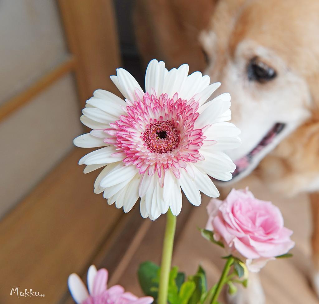 花とおじい