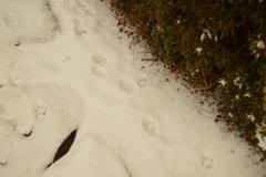 猫の足あと
