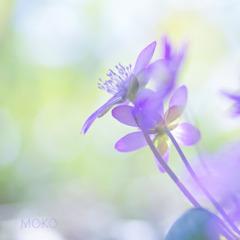 春の光につつまれて