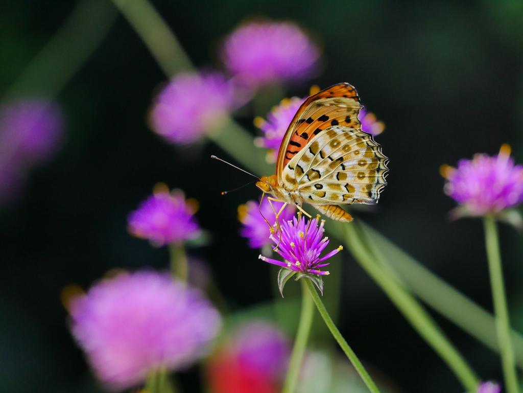 昆虫 2009084