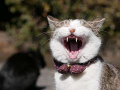 猫 20022113