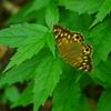 昆虫 2008195