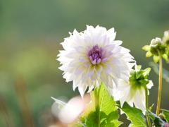 花 20090818