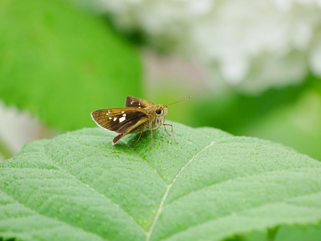 昆虫 2006231