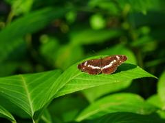 昆虫 20081713