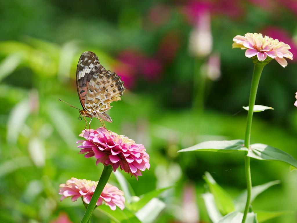 昆虫 2008172