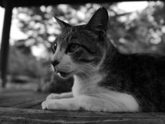 猫 20071018