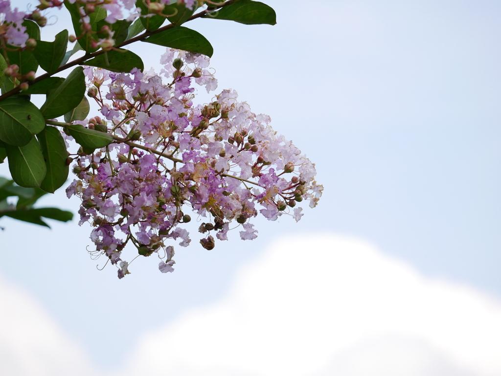 花 2008176