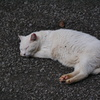 猫 20080410