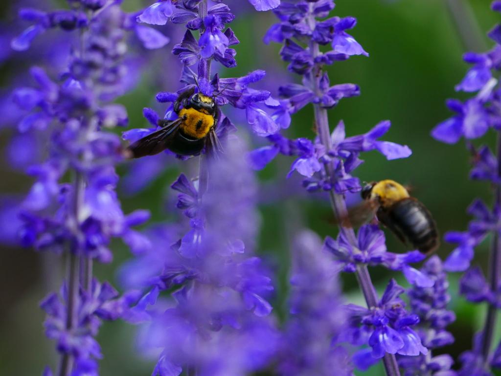 昆虫 2006233