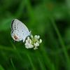 昆虫 2007251