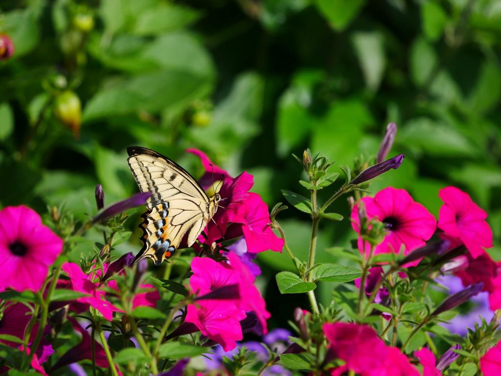 昆虫 2006232