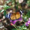 昆虫 2009081