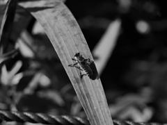 昆虫 20073110