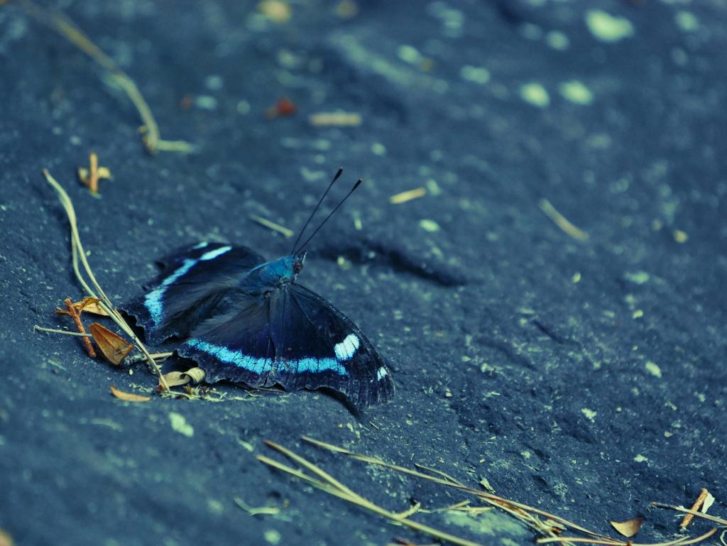 昆虫 2008249