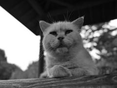 猫 20071019