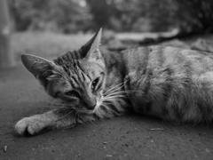 猫 20071017