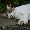 猫 20080420