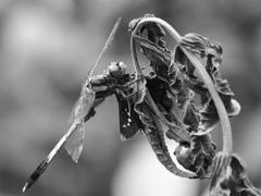 昆虫 2008179
