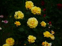 花 2005141