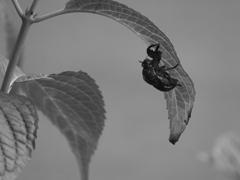 昆虫 20090816