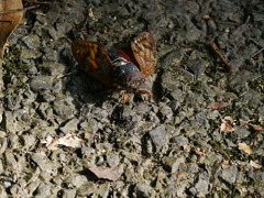 昆虫 2008244