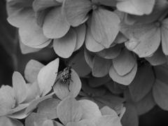 昆虫 2006236