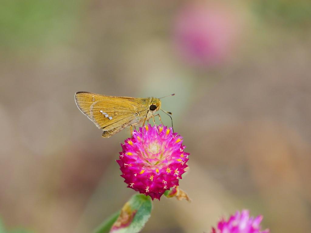 昆虫 2008171